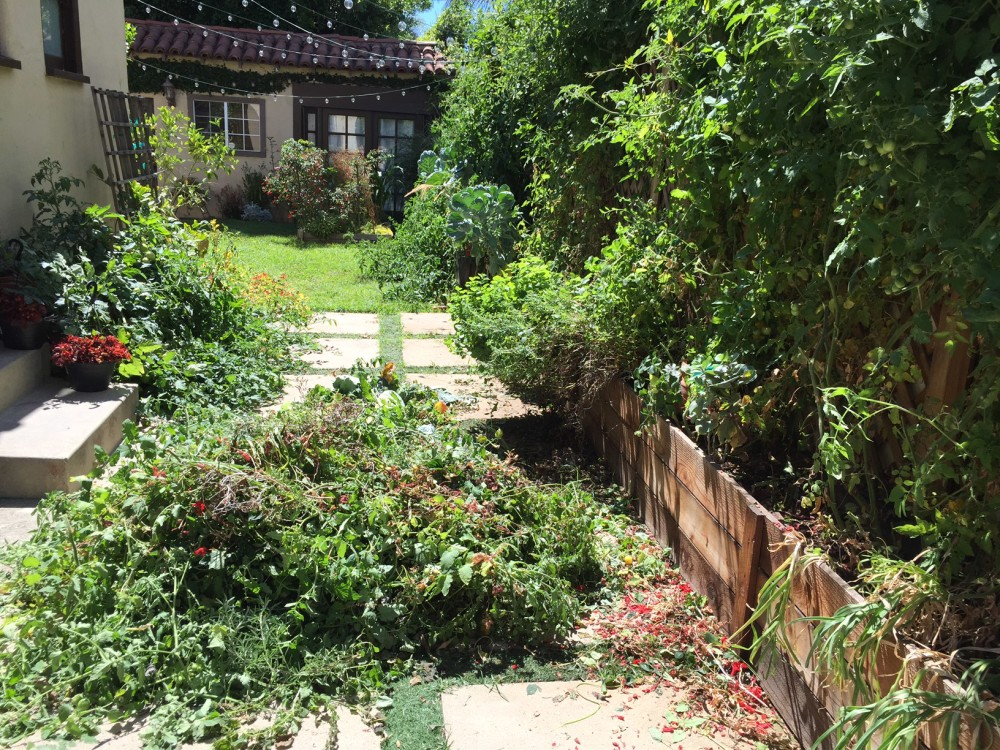 Green Water and Other Garden Musings